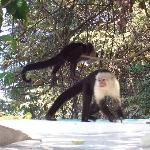 river cruise - monkeys hitchin a ride