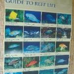 One of many fish ID guides.