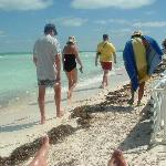 plage et algue