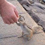 feeding the chipmunks