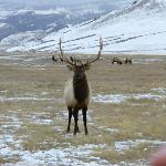 Elk on Refuge