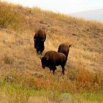 National Bison Range Photo