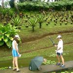 Jardin de Balata-billede