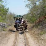 Cenote Trip, wooden buggy