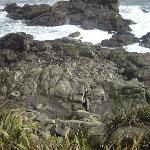 Seal Colony, Cape Foulwind- look closely there are dozens in amongst the rocks