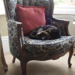 comfy cat!