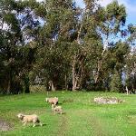 Organic lawnmowers