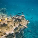 greta snorkelling- beware of the jellyfish