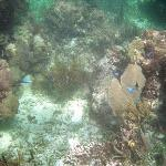 Parque Nacional Arrecife Puerto Morelos - Puerto Morelos Reef