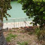 Iguana near Hotel Pool
