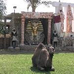 Camel at Amar Sina zoo/park