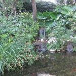Koi Pond in Exotic Garden of Monte Carlo