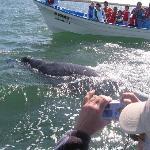 Grey whale tour at Lopez Matea