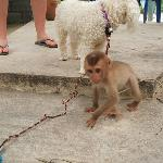 The little monkey that we saw at a show nearby.  Sad but so cute.