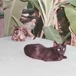 the posada sian ka'an cats