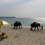 Big things on Bang Tao beach