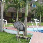 Hotel Safari, pool and