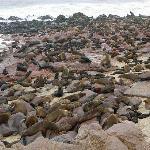 Cape Cross Lodge - seal colony
