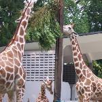 Zoo Negara Photo