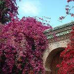 Bougainvillea adorning the walls of a hidden villa