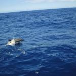 Dolphins on trip