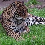Cherry Brook Zoo Inc. Foto