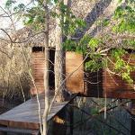 My beloved tree house