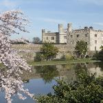 Leeds Castle looking through Cherry Blossom