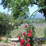 Pic of Napa from the Trinchero Family Winery