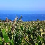 Local banana plantations on a walk down to the coast