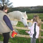 Feeding Ms O'Toole's horse