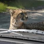 Photo of Beekse Bergen Safari Park