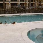 Ducks, Feathers and droppings in pool