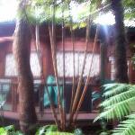 Volcano Rainforest Retreat Photo