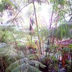 Landscape - Volcano Rainforest Retreat Photo