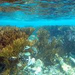 Snorkeling-Half Moon Bay