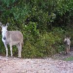 Wild Donkeys!