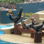 These are the sea lions at LoroParque