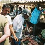 Negombo fish market-follow your nose