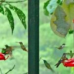 Saw 16 varieties of humming birds at lodge.
