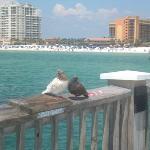 Serene Birds-Clearwater Pier