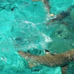 More Sharks!!