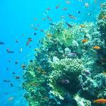 Reef of Beeach
