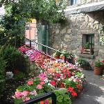 Beautiful flowers/Donnelly's of Barna