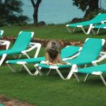 Baboon enjoys lunch on sunbed