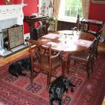 The dining room with both Labradors