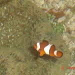 We found Nemo in Dumaluan!