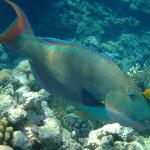 Taken on the house reef