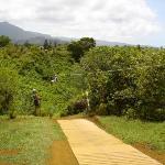 Zip line in Kauai