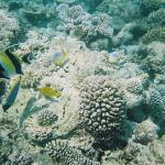 Underwater Camera shot of sealife (single use camera)
